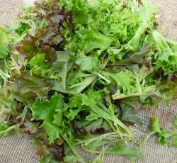 mix baby leaf asiatiche
