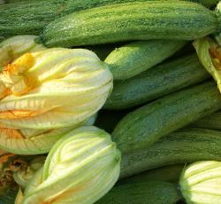 zucchina biodinamica