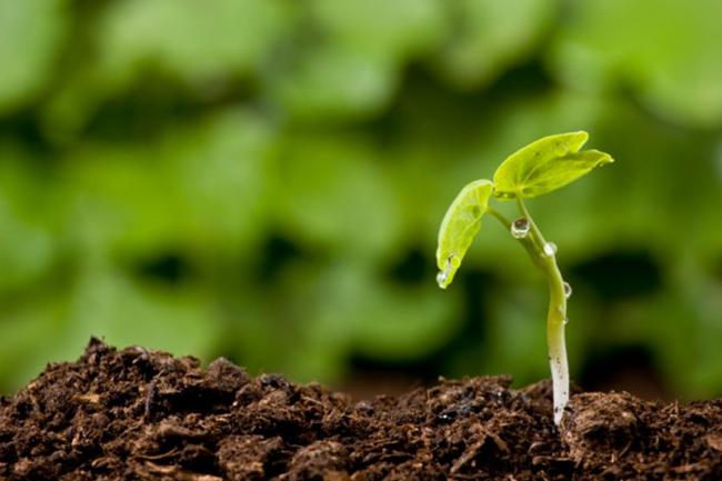 Agricoltura biodinamica: spieghiamo cos'è