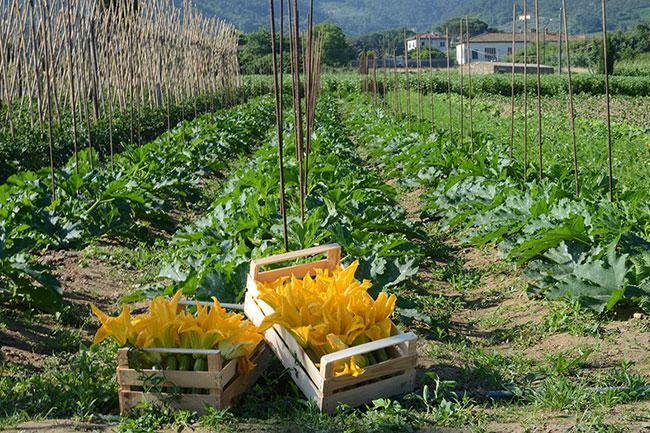 Agricoltura biodinamica: perché è sana