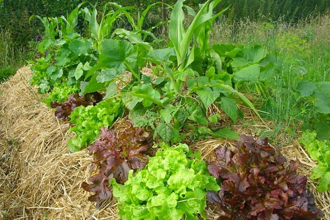 Come coltivare un'orto biodinamico: il corso a Trento il 28-29-30 agosto
