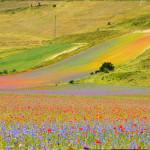 Biodinamica: il benessere dalla conoscenza della natura