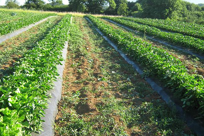 Agricoltura biodinamica, corso sulle basi – Firenze, 9/10 e 23/24 maggio 2015