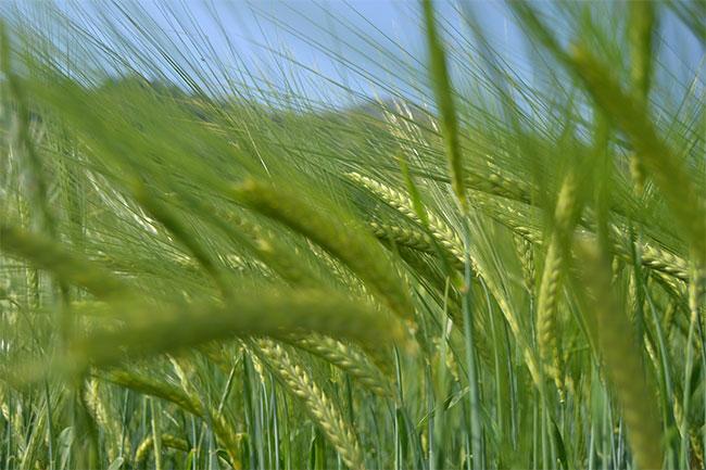 Rudolf Steiner e i tre principi dell'agricoltura biodinamica