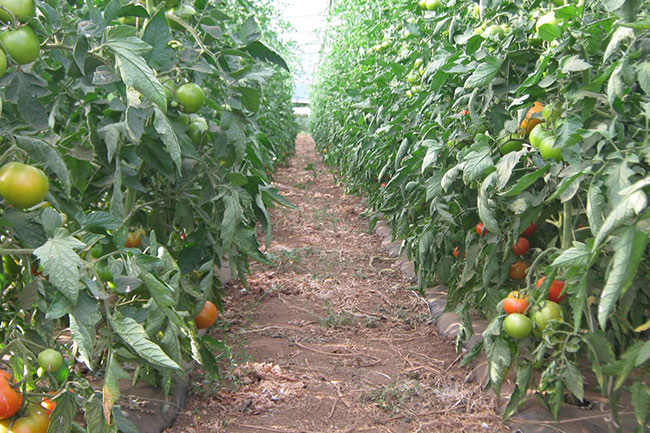 Agricoltura biodinamica: una porta verso il futuro